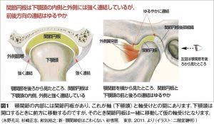 関節円板について木野図1